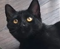 A picture of #ET01302: Pierre a Domestic Short Hair back