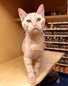 [another picture of Quiver, a Domestic Short Hair orange\ cat]