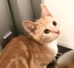 A picture of #ET02577: Finn a Domestic Short Hair buff