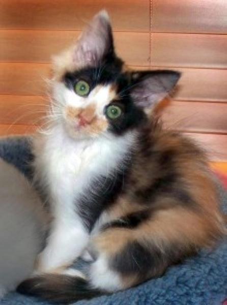 Adopted Ns03447 Darla
