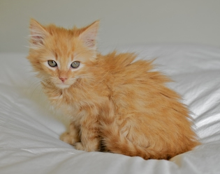 Adopted Ns04085 Cashew