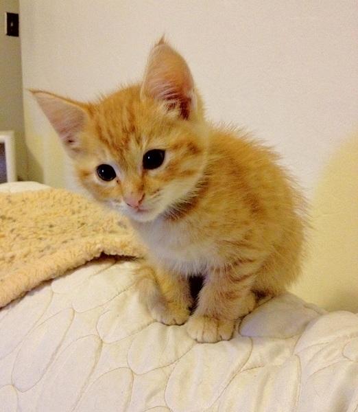 Adopted Ns04301 Fanta