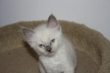 Adopt A Cat In Ns
